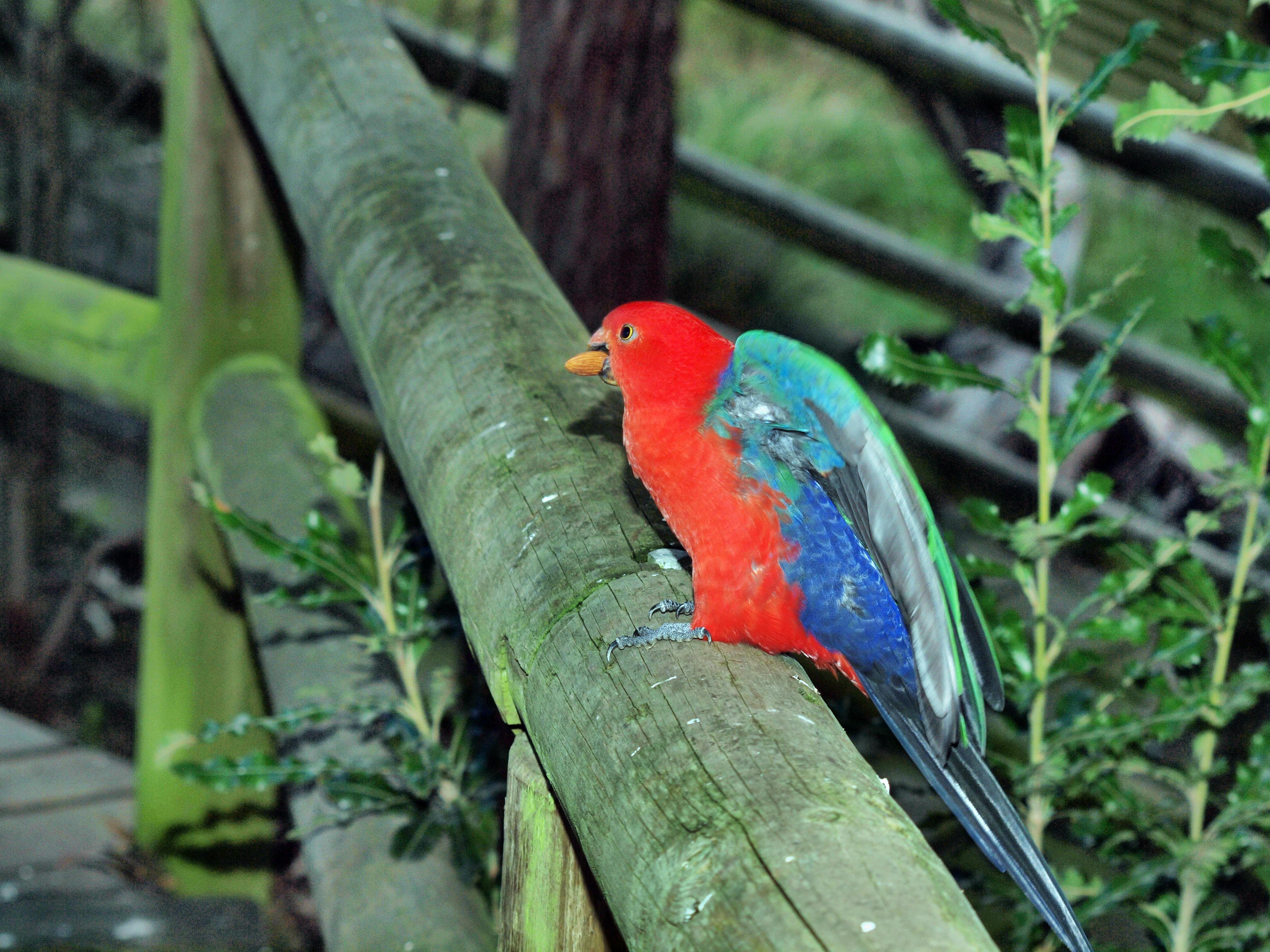 Parrot-17.jpeg