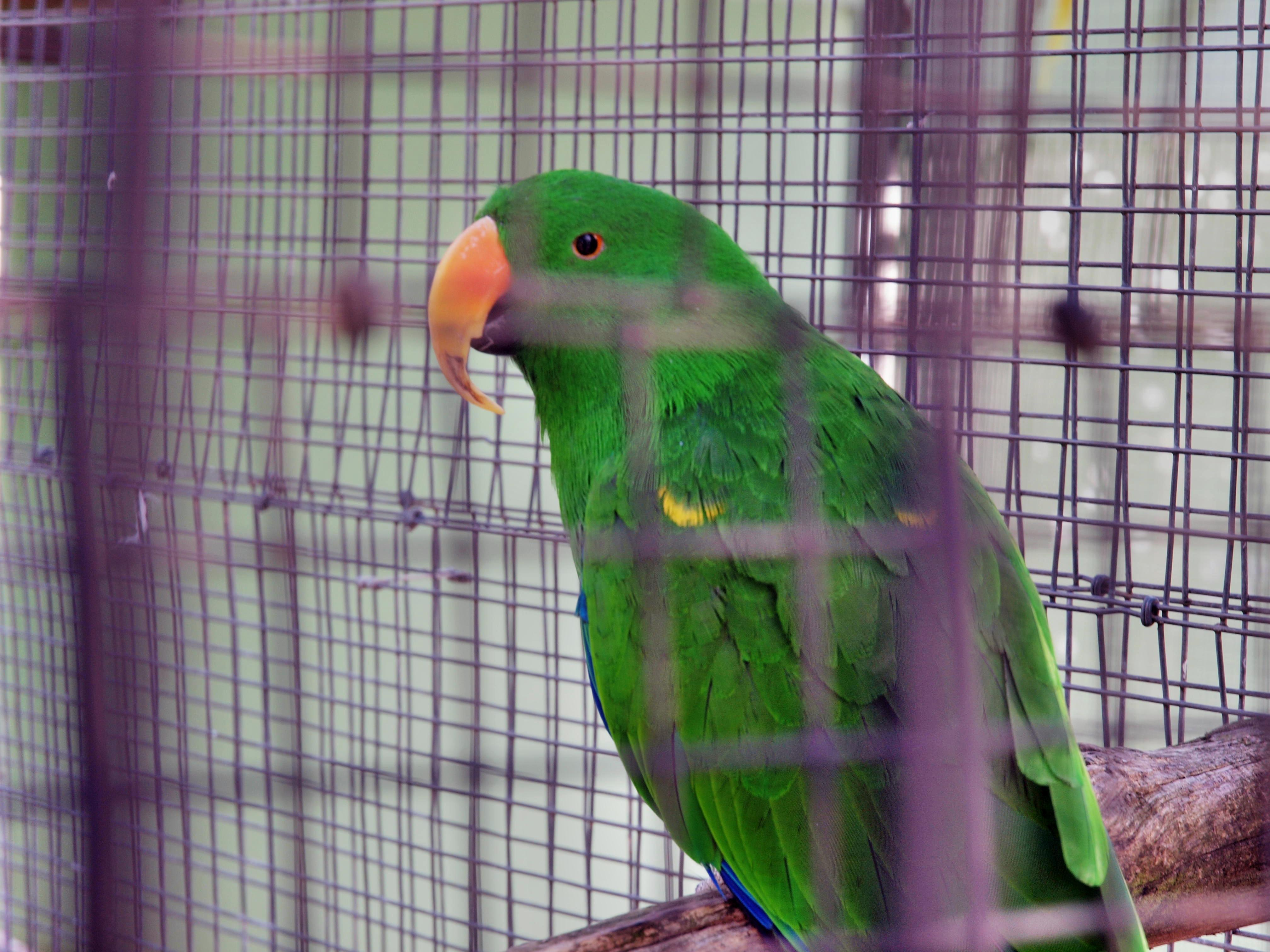 Parrot-7.jpeg