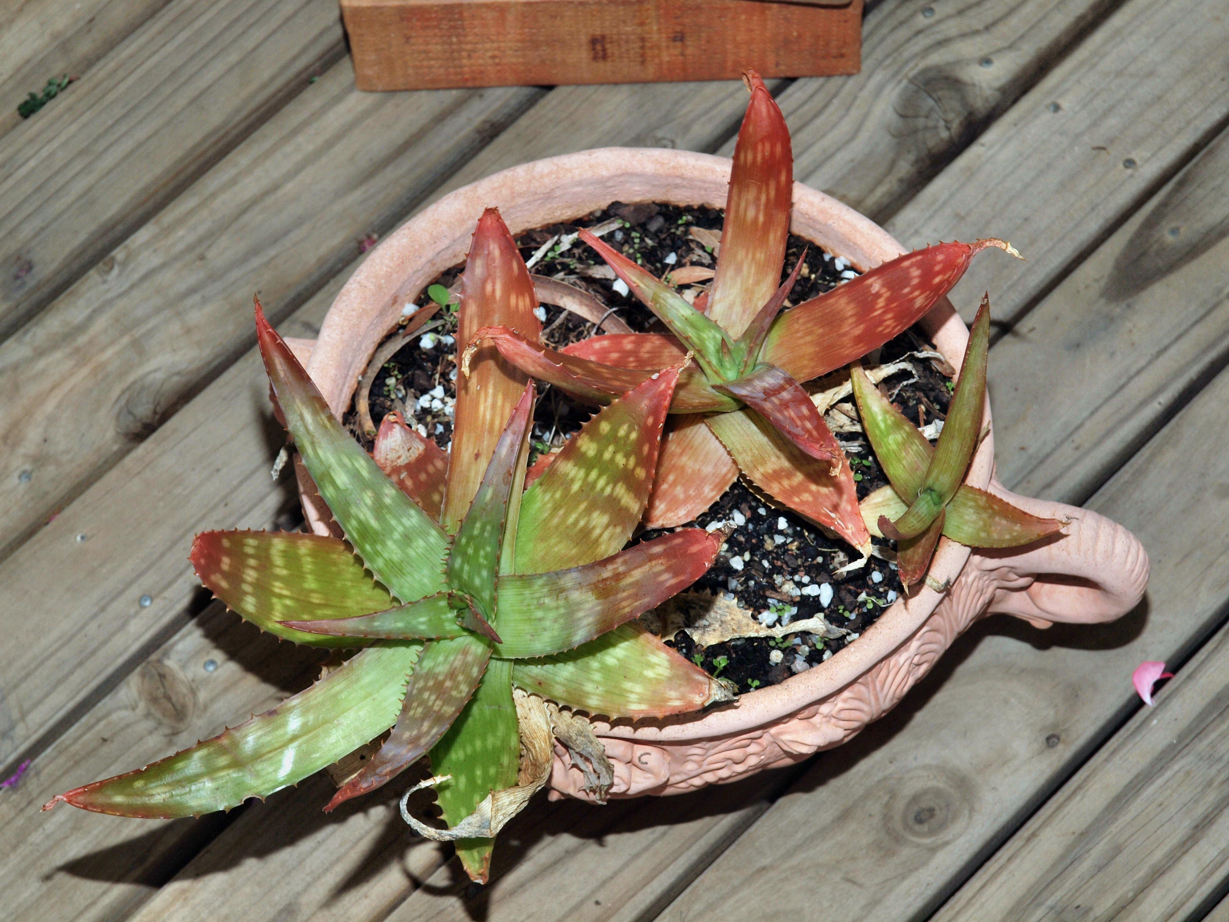 Plant-4.jpeg