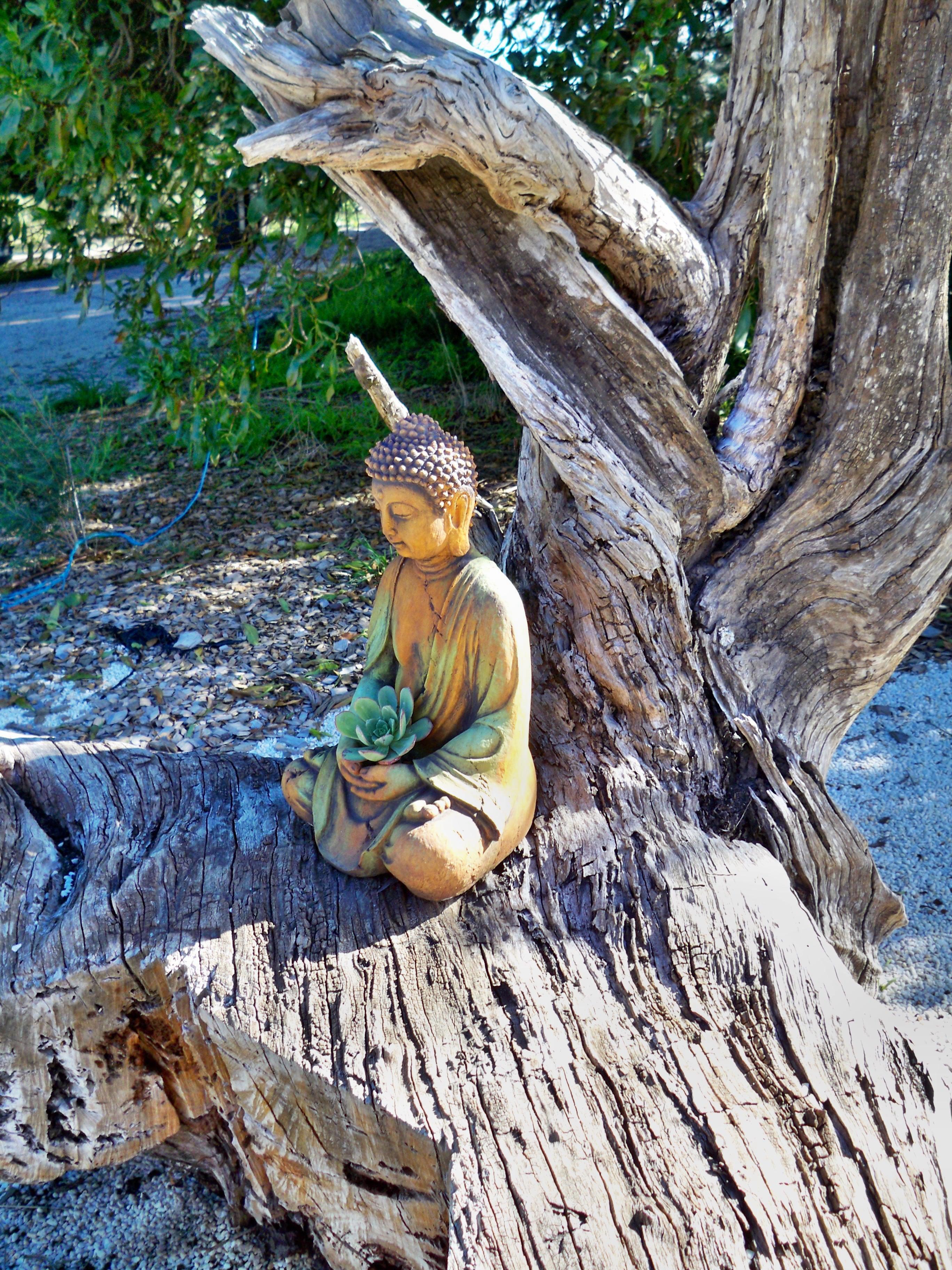 Buddha-1.jpeg