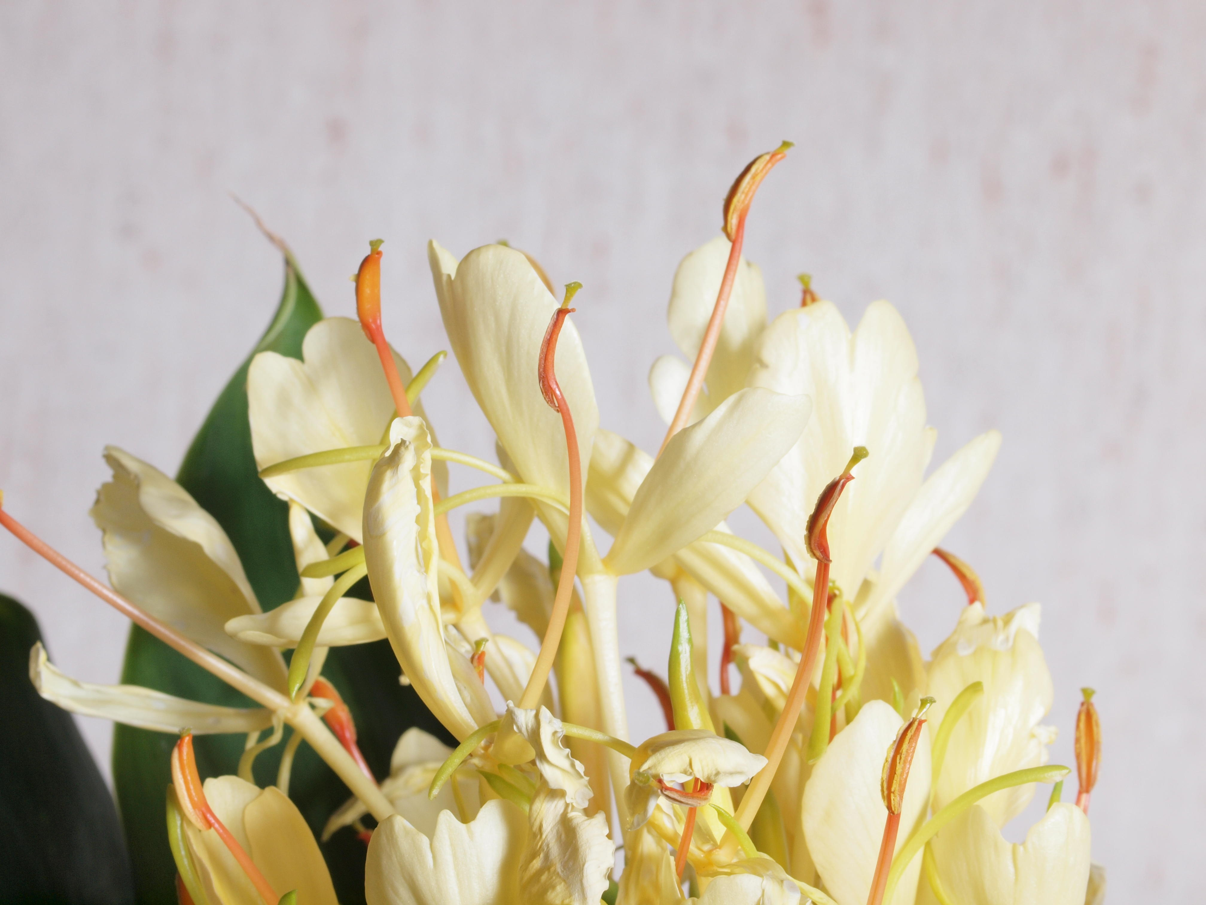 Flower-3.jpeg