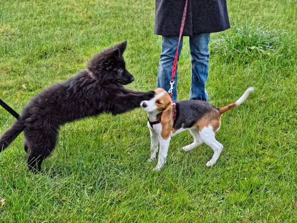 dog-training-11.jpeg