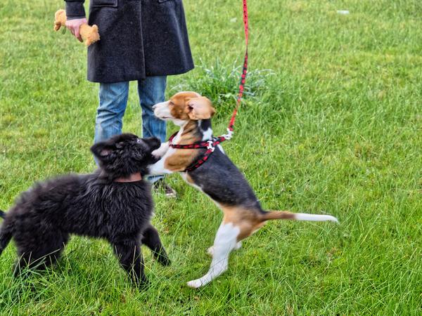 dog-training-12.jpeg