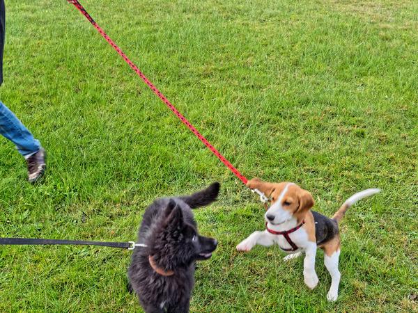 dog-training-16.jpeg