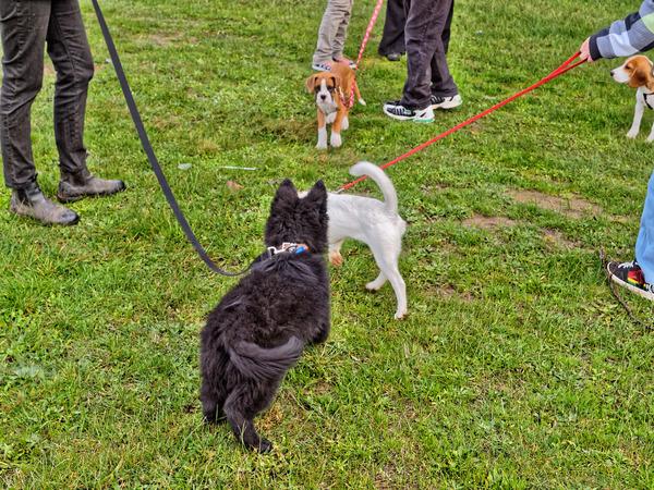 dog-training-2.jpeg