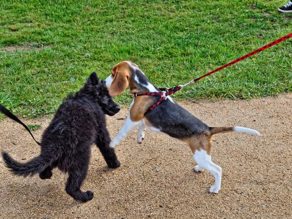 dog-training-22.jpeg