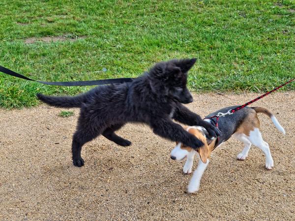 dog-training-23.jpeg
