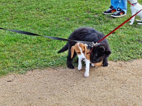 dog-training-24.jpeg