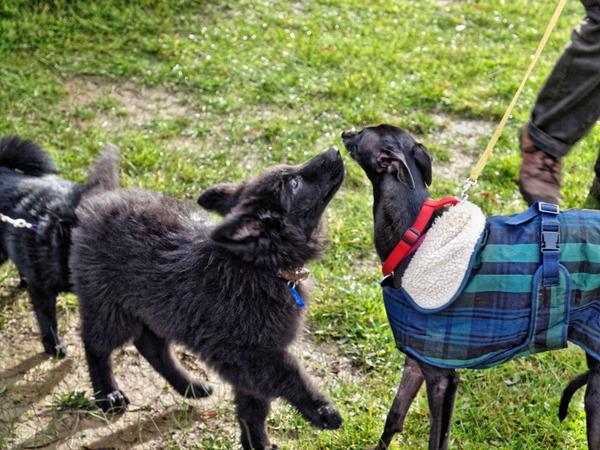 dog-training-30.jpeg