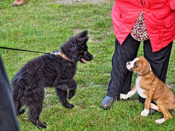 dog-training-34.jpeg