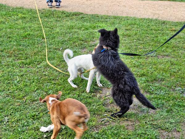 dog-training-37.jpeg