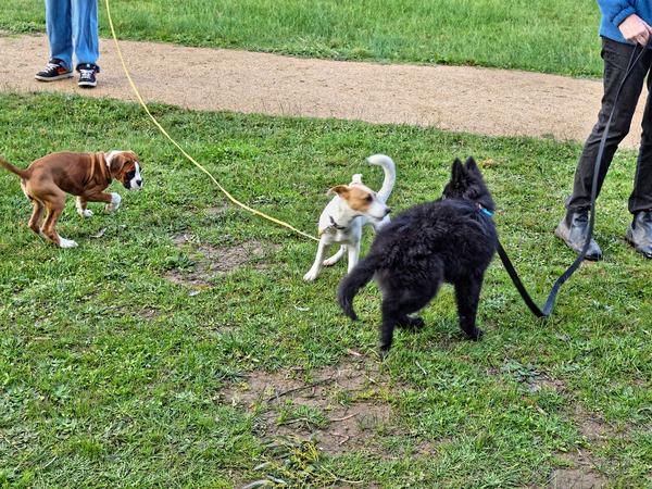 dog-training-38.jpeg