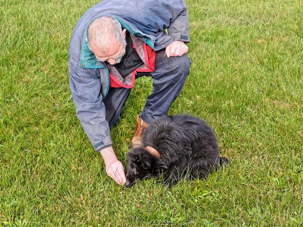dog-training-46.jpeg