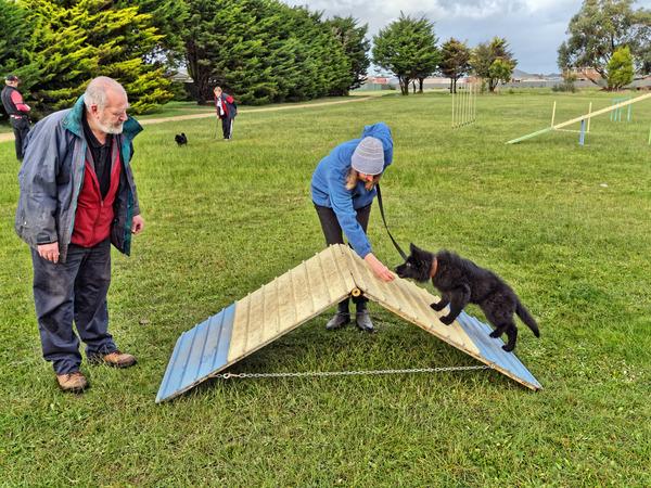dog-training-48.jpeg