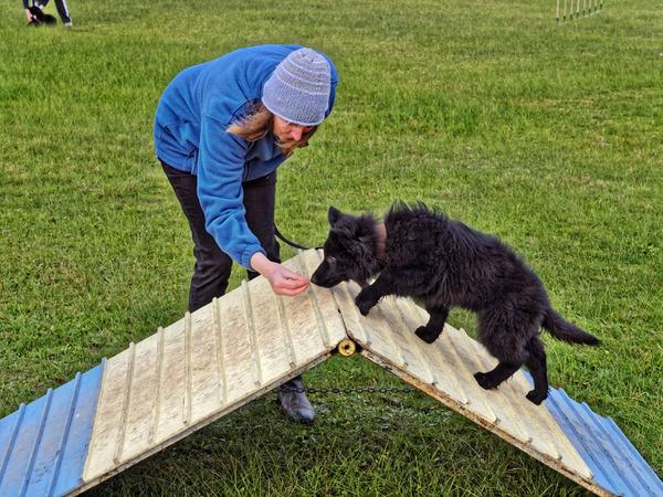 dog-training-50.jpeg