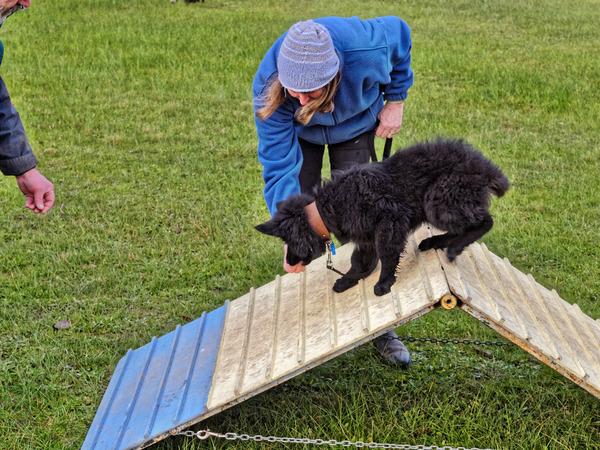 dog-training-51.jpeg