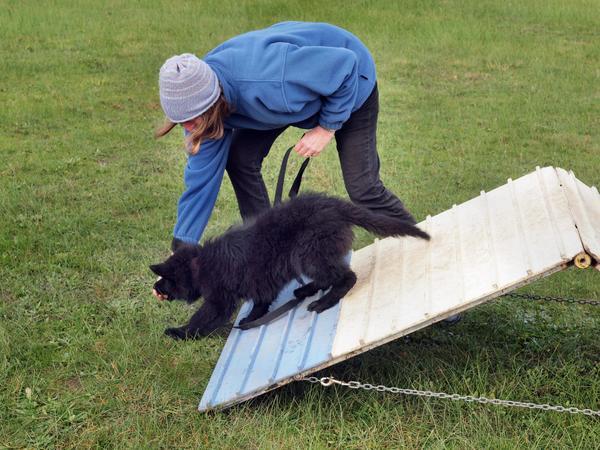 dog-training-52-ufraw.jpeg