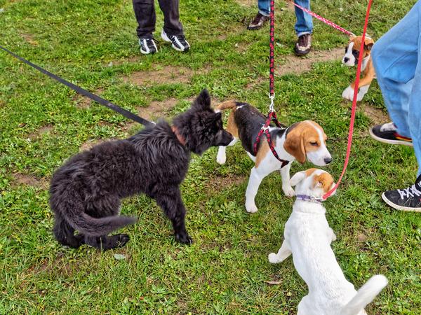 dog-training-6.jpeg
