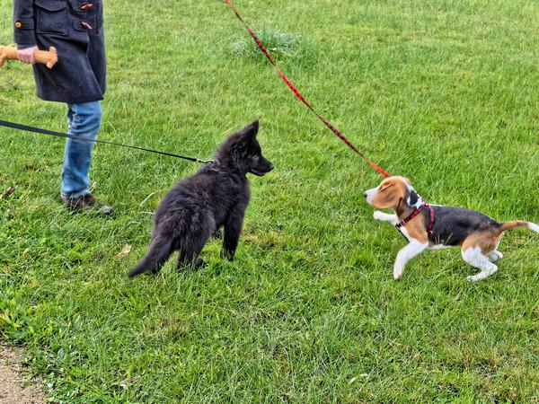 dog-training-8.jpeg