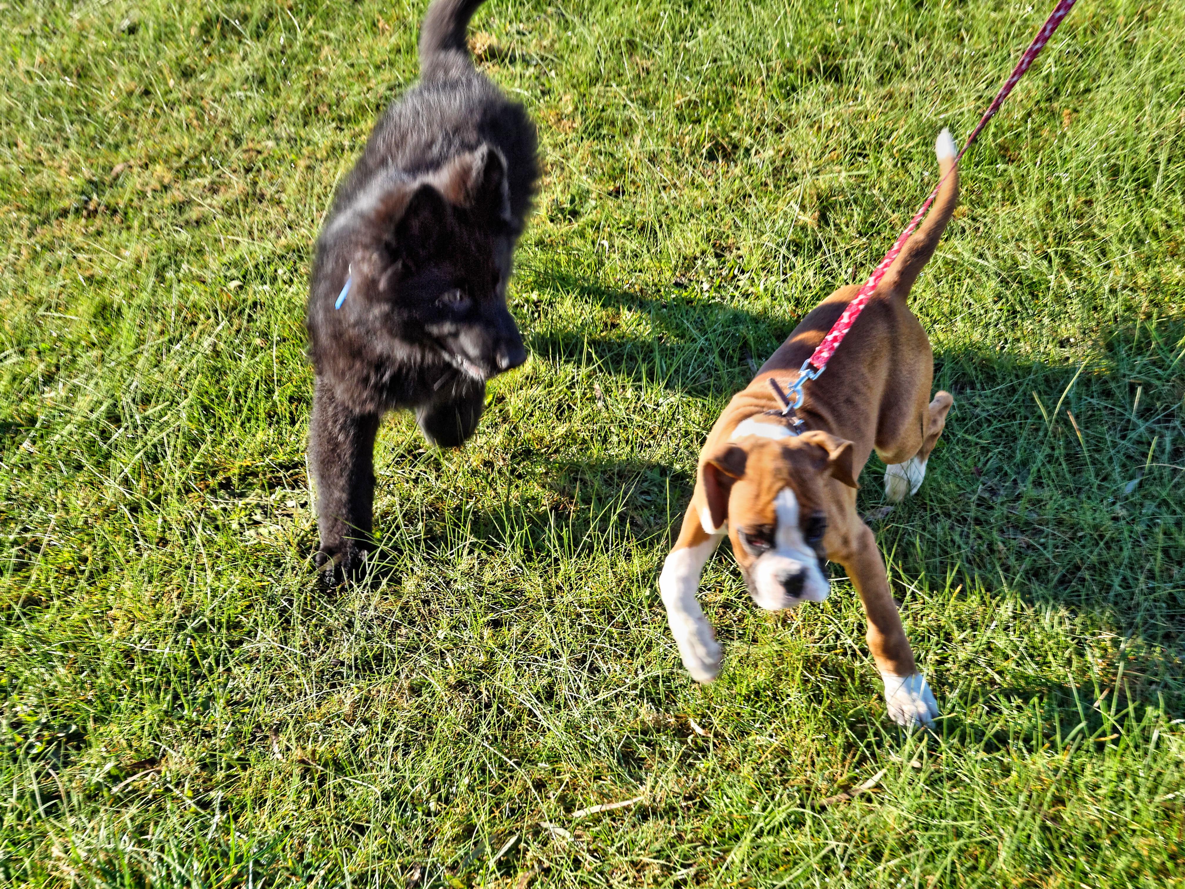Dog-training-3.jpeg