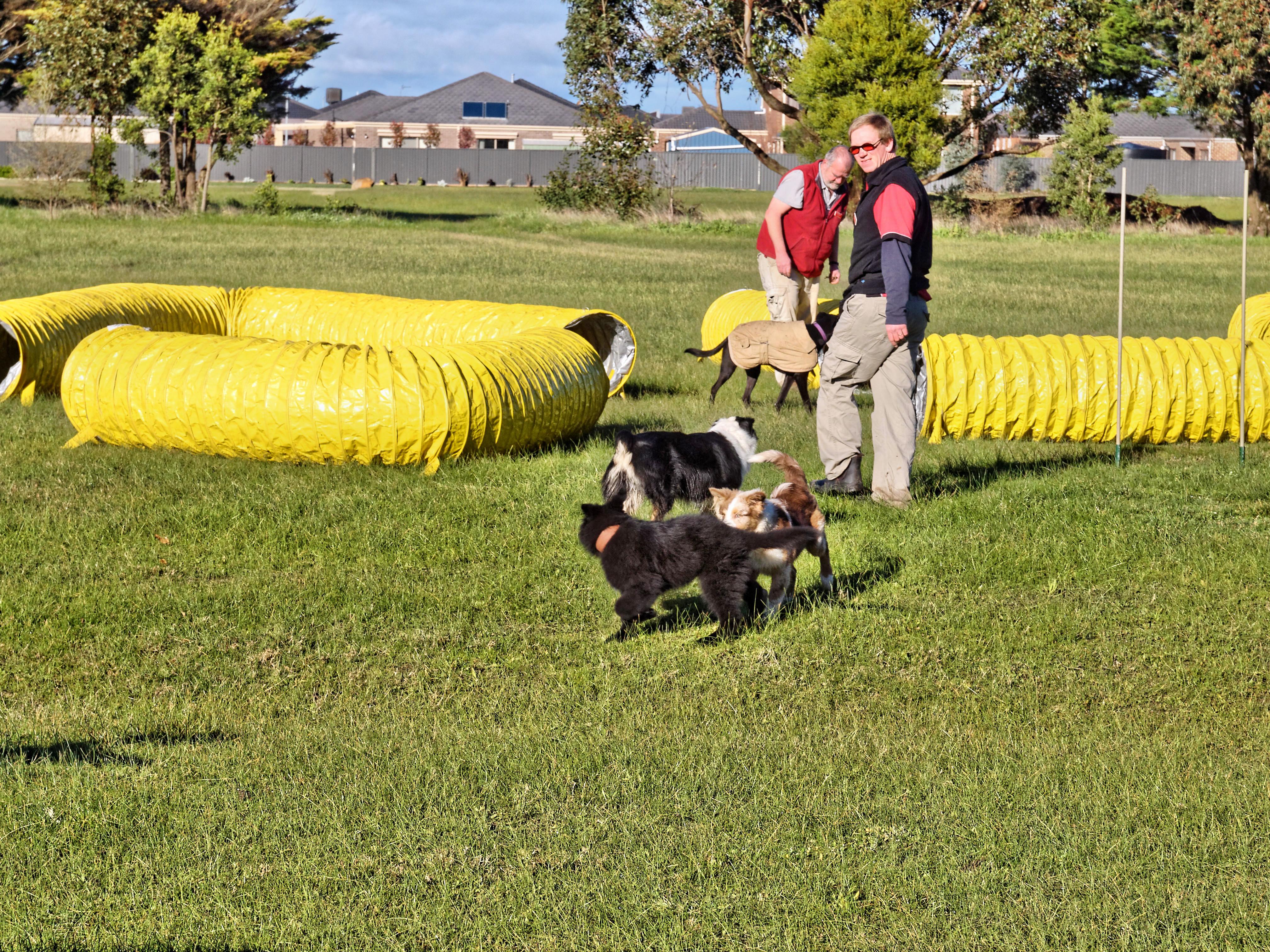 Dog-training-4.jpeg