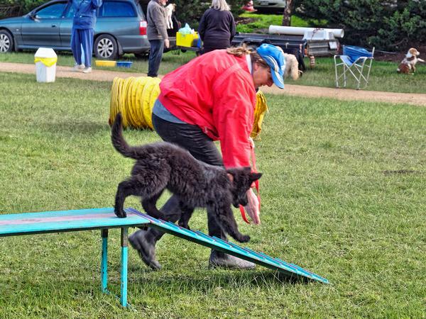 Dog-training-26.jpeg