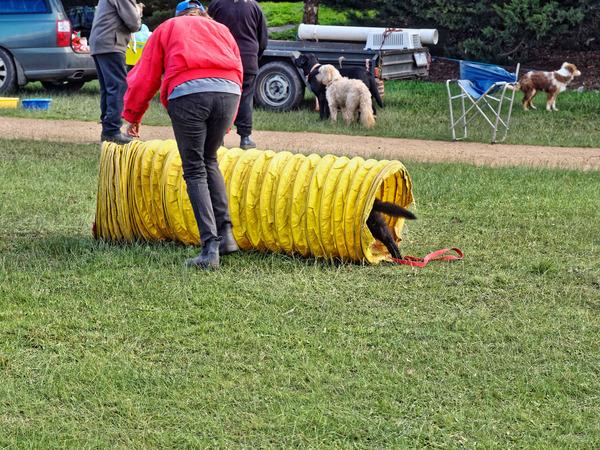 Dog-training-29.jpeg
