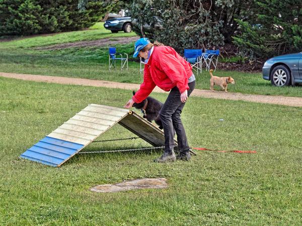 Dog-training-31.jpeg