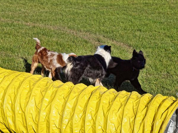 Dog-training-7.jpeg