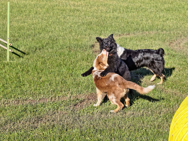 Dog-training-9.jpeg