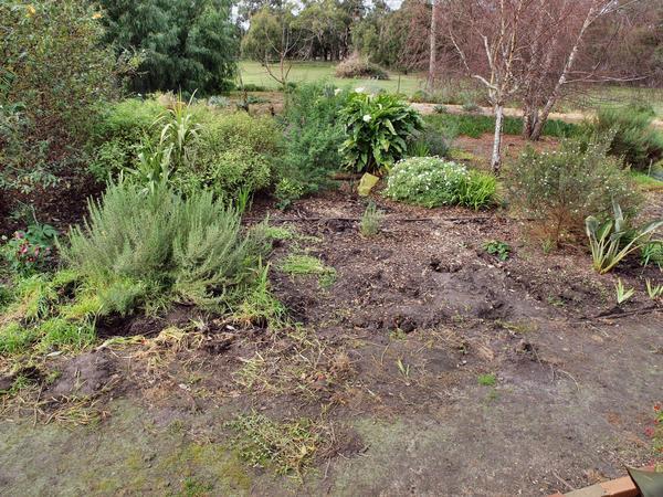Garden-before-1.jpeg