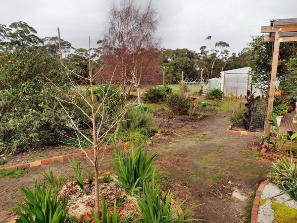 Garden-before-2.jpeg
