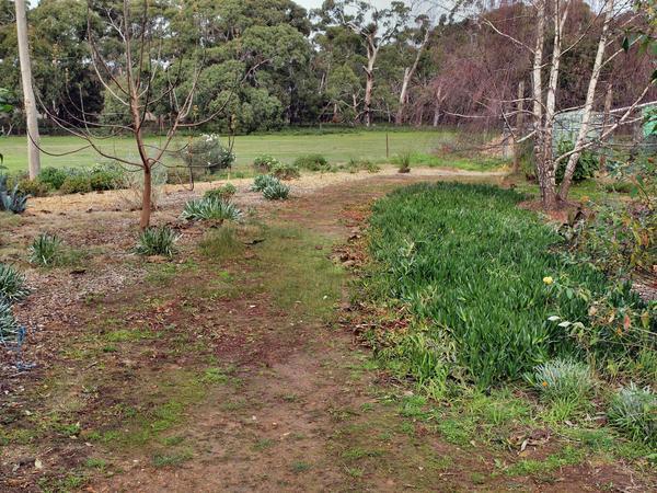 Garden-before-3.jpeg