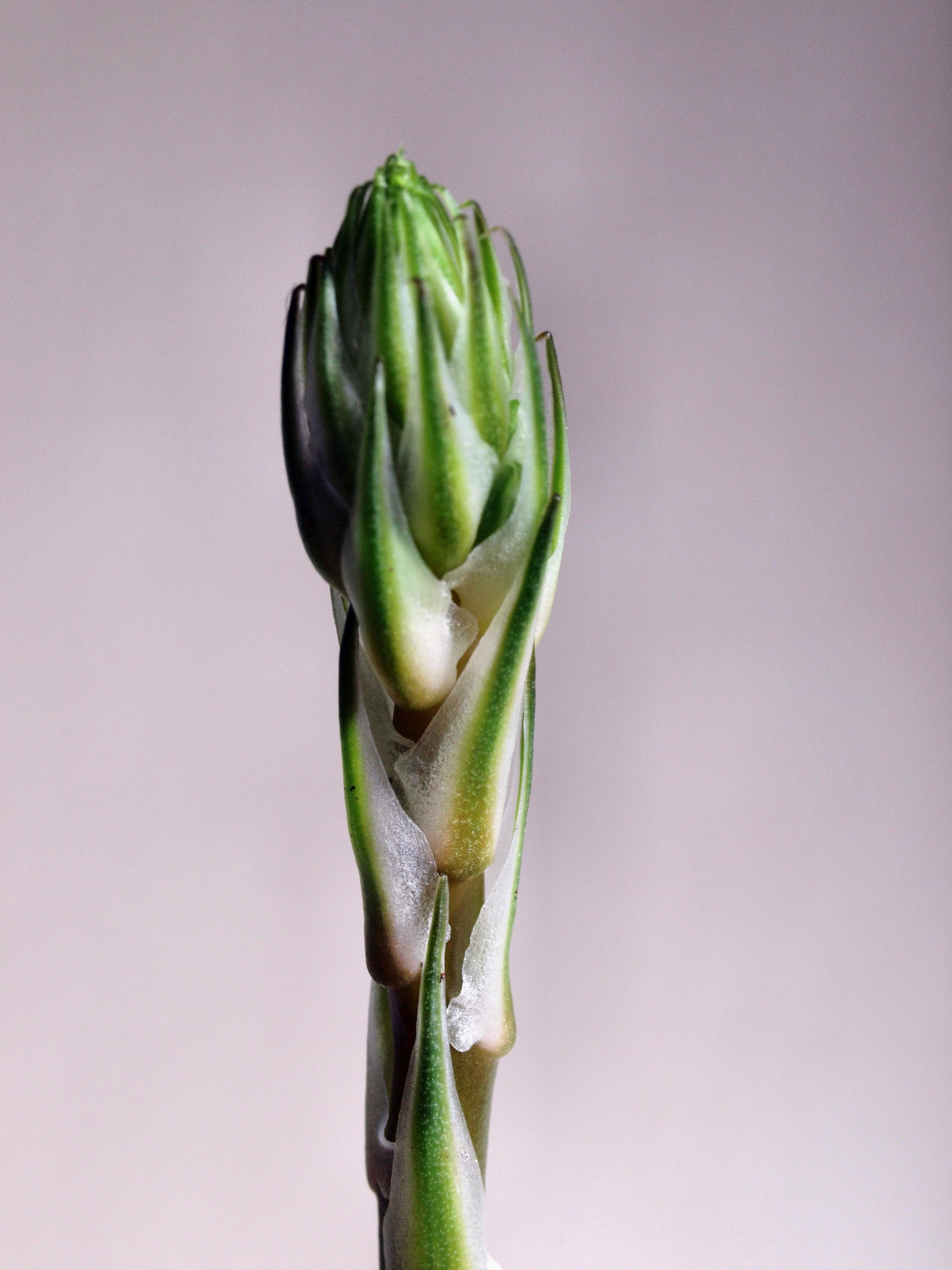 Succulent-2-2.jpeg