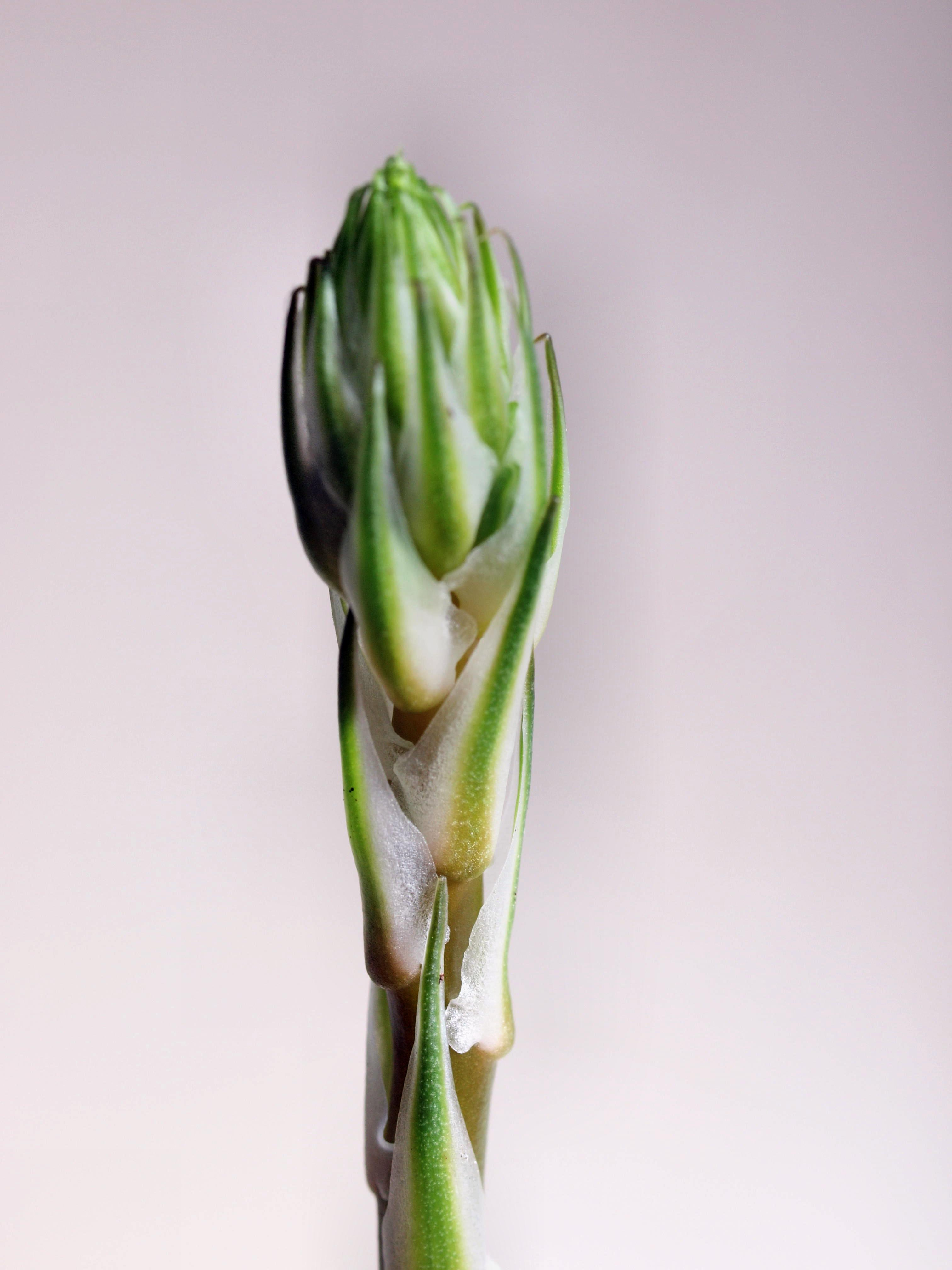 Succulent-2-3.jpeg