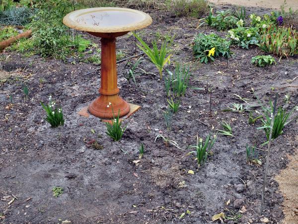 Garden-5.jpeg