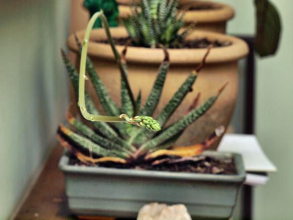 Succulent-5.jpeg