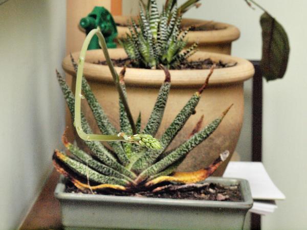 Succulent-7.jpeg