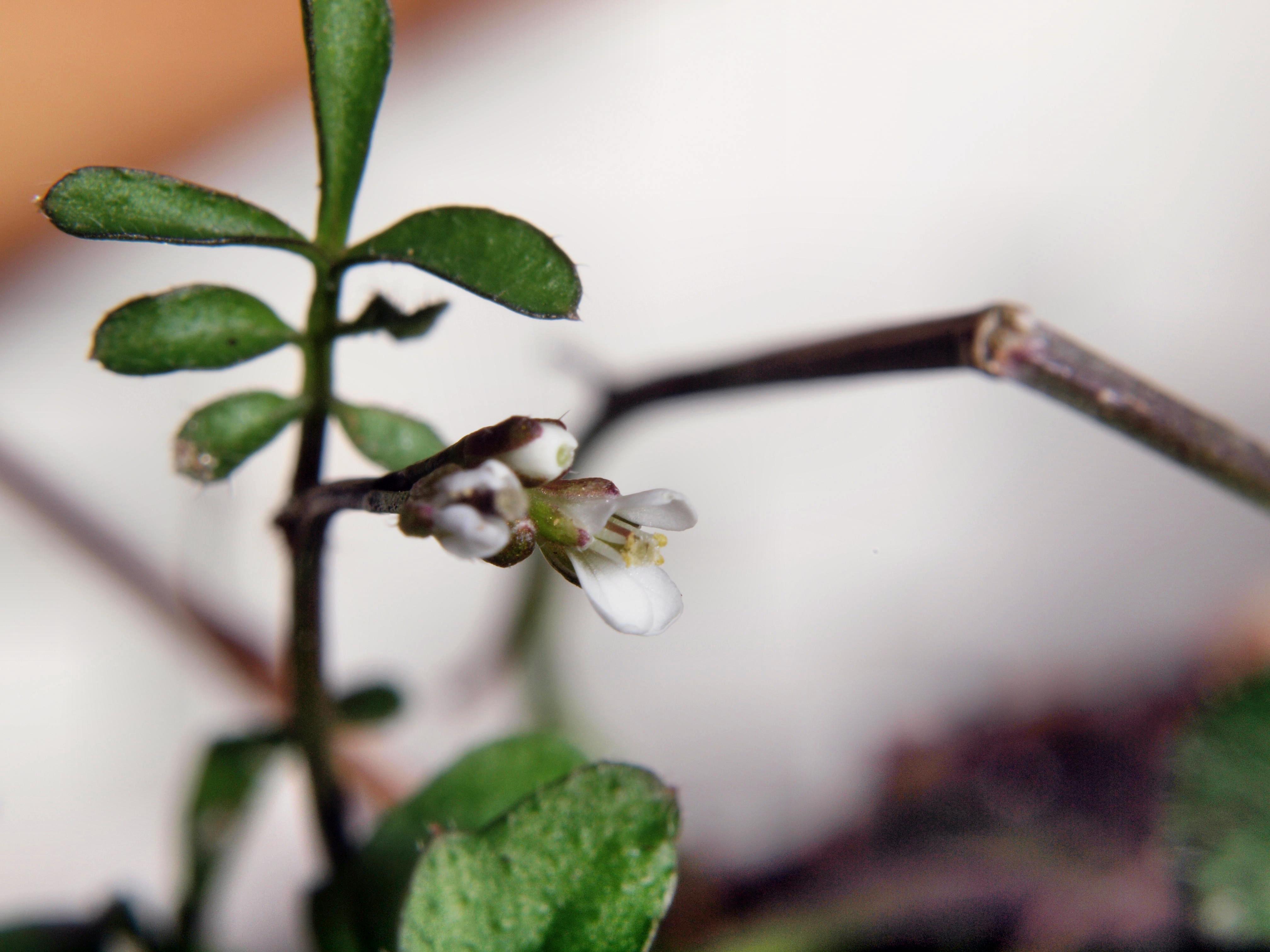 Mystery-plant-9.jpeg