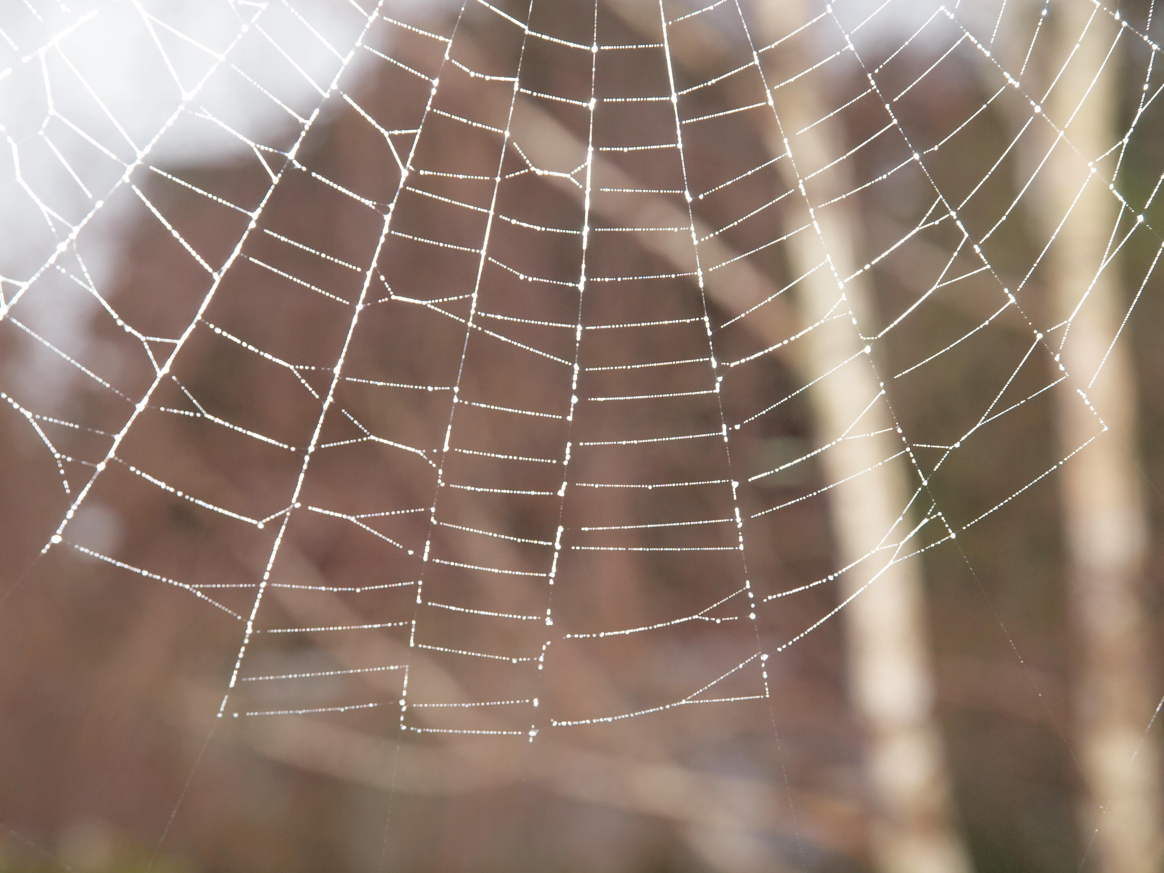 This should be Spiders-web-.jpeg.  Is it missing?