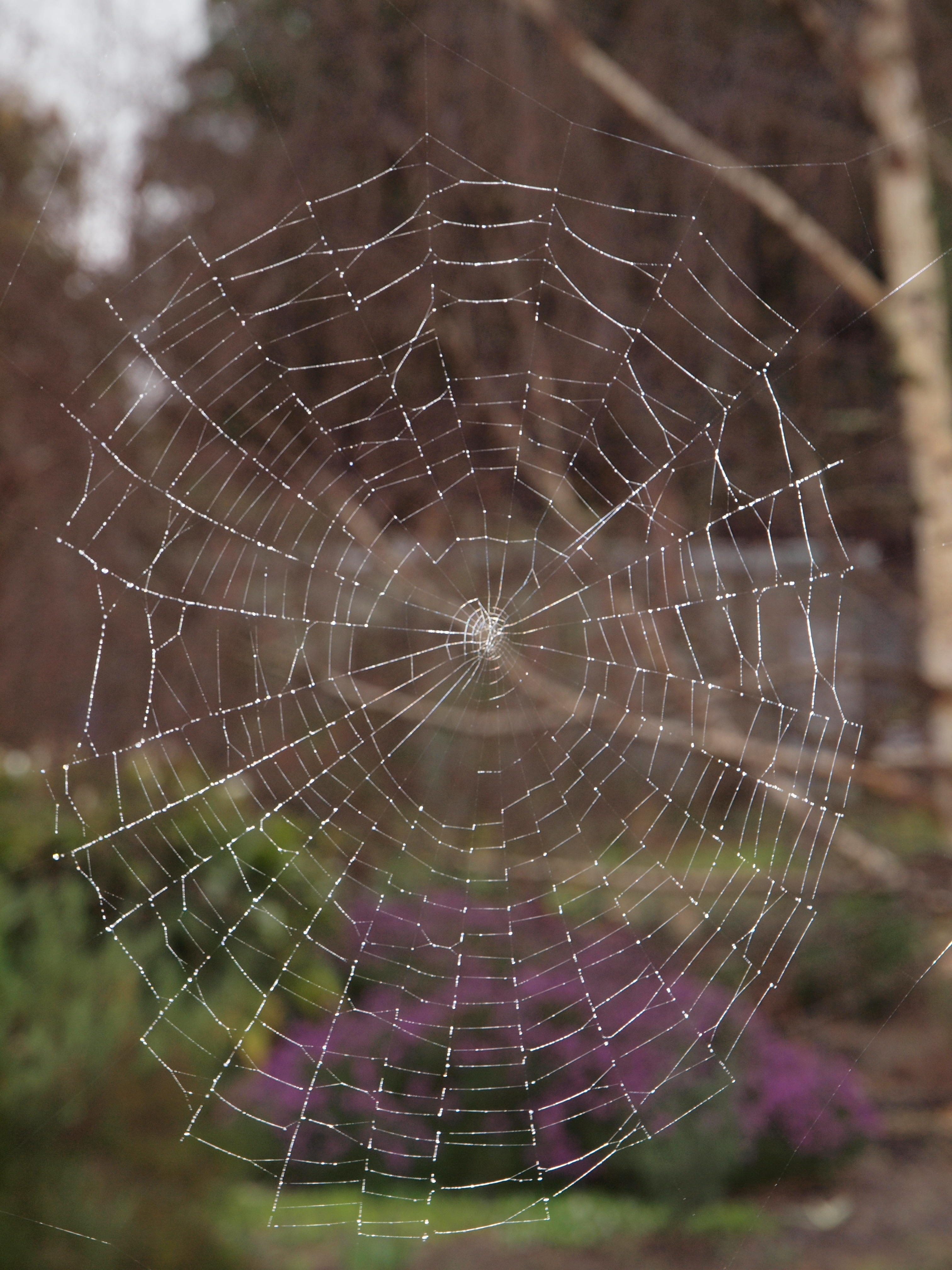 Spiders-web-1.jpeg