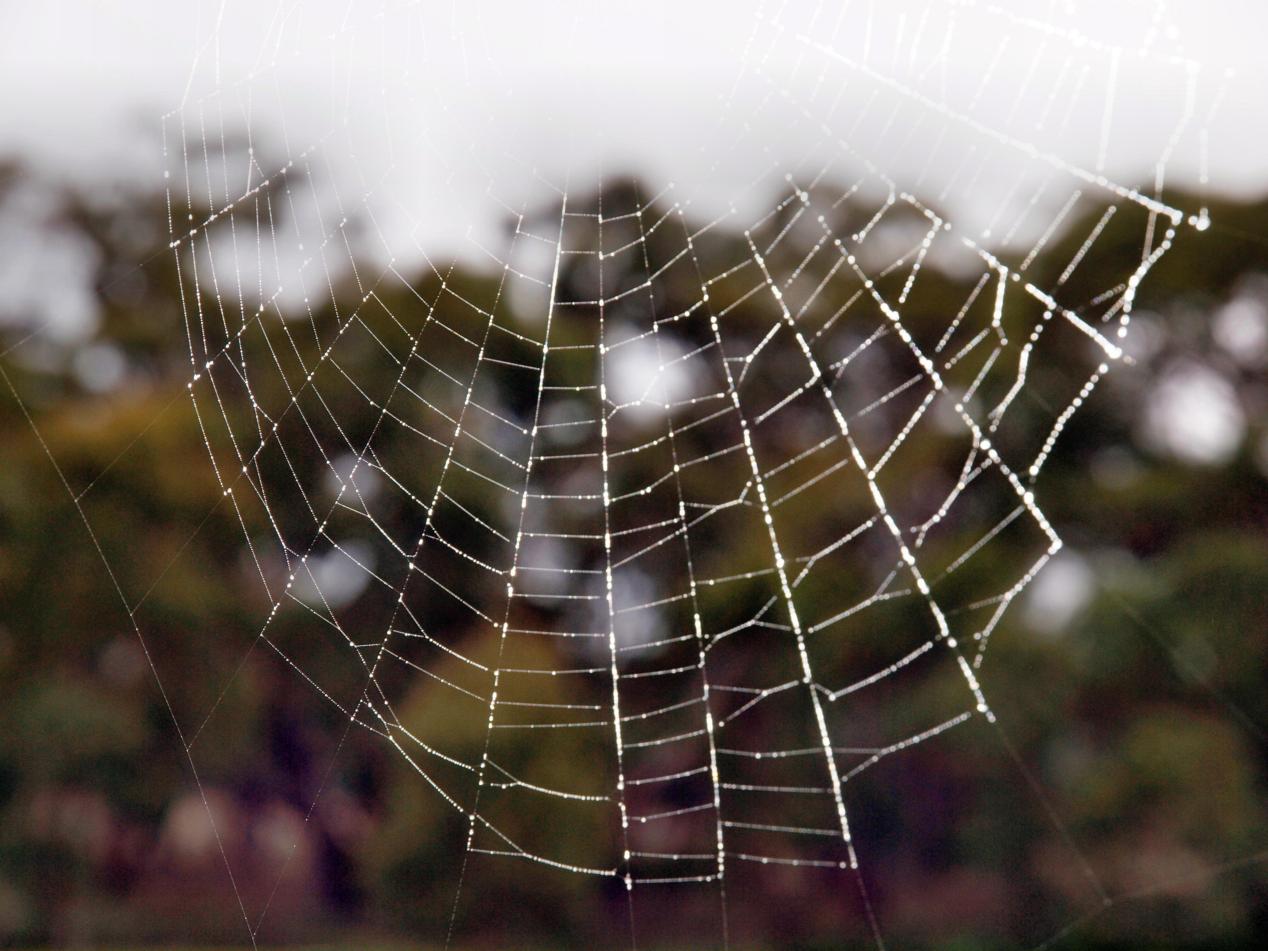 Spiders-web-3.jpeg