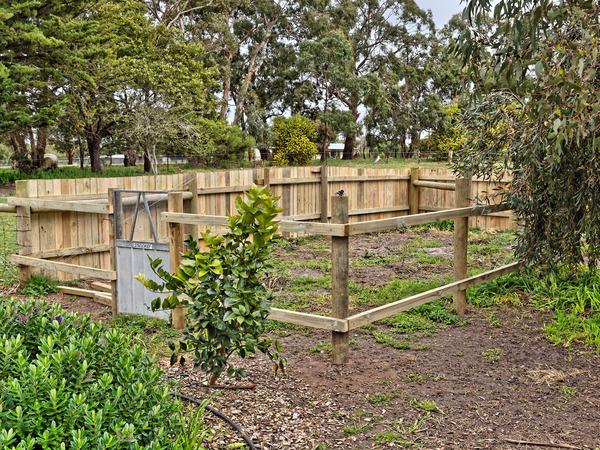 Veggie-garden.jpeg