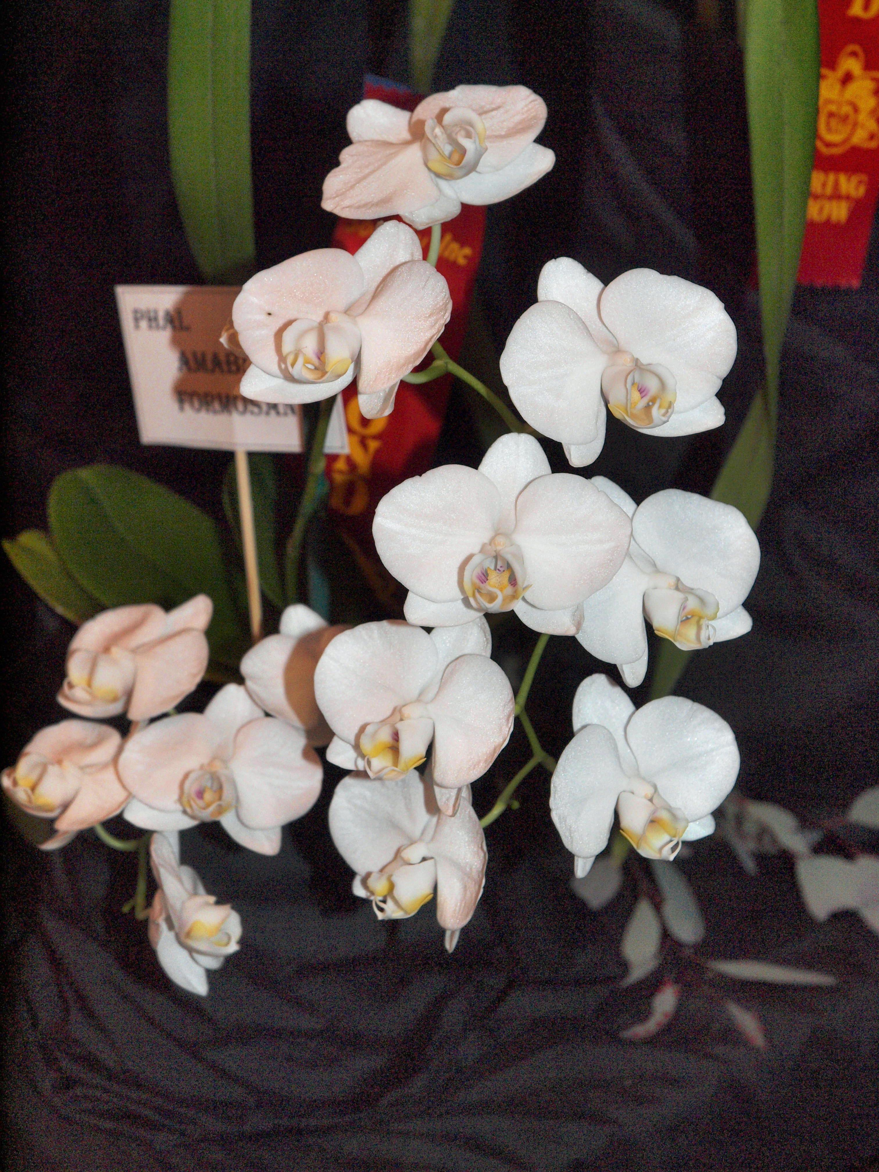 Orchid-10.jpeg