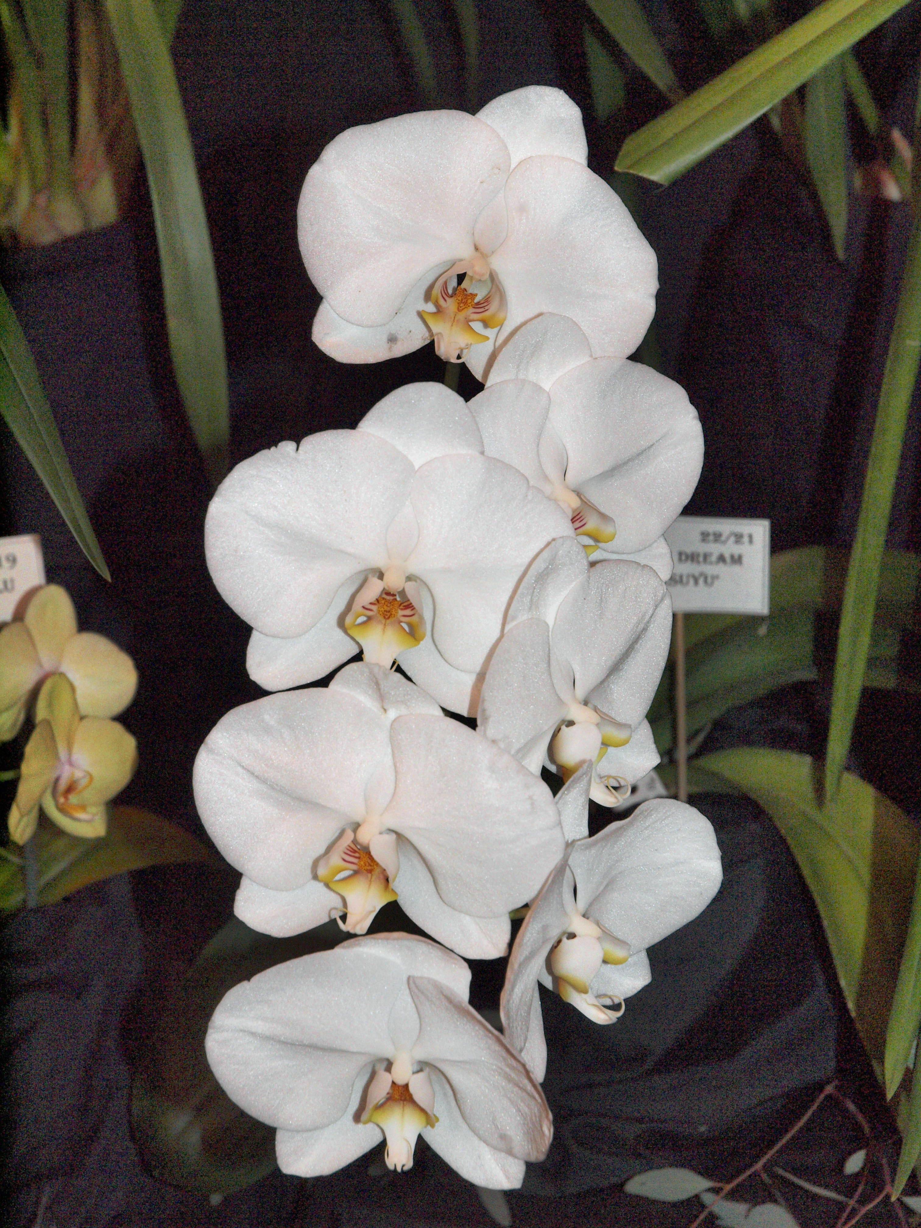 Orchid-11.jpeg