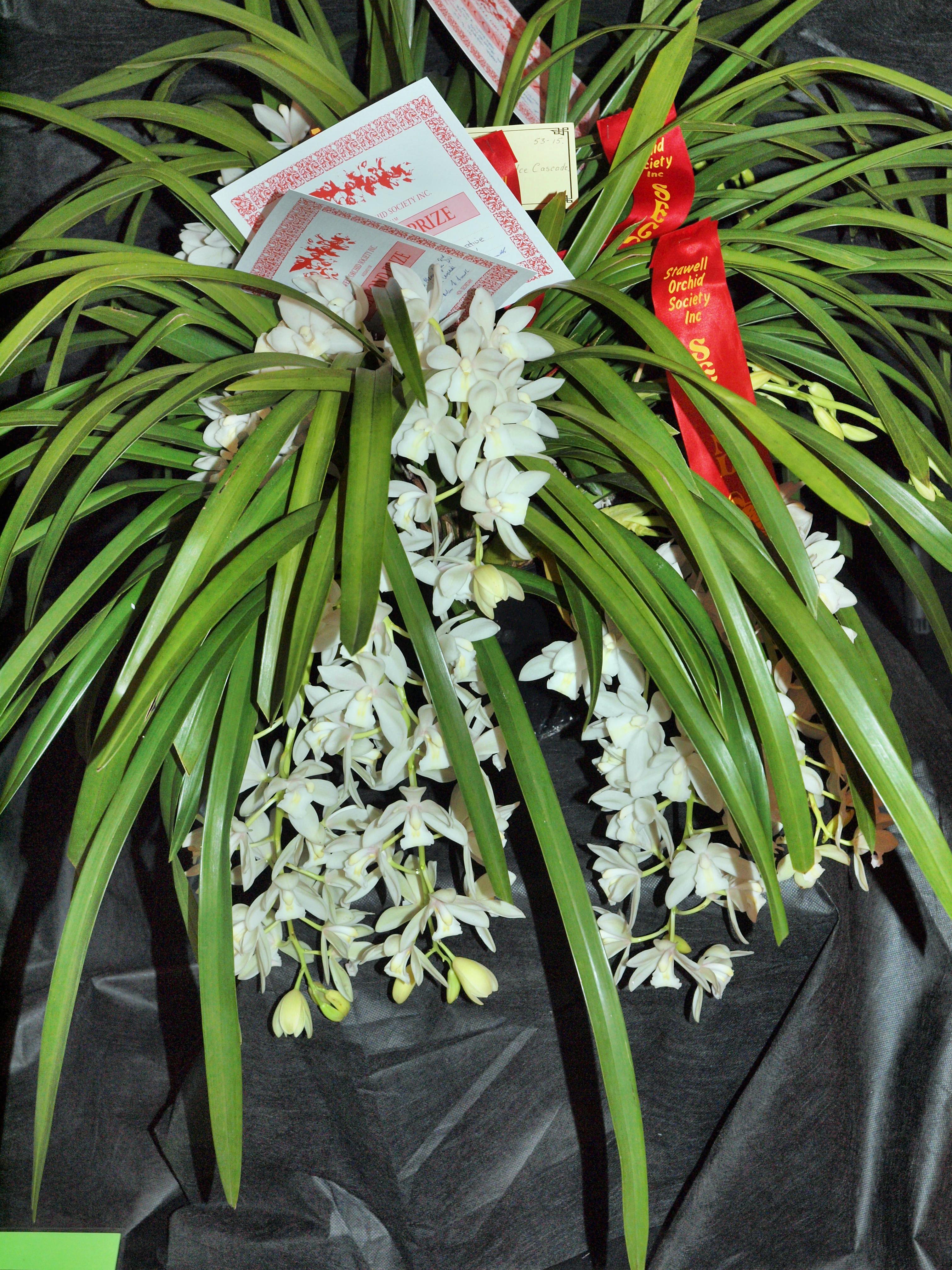 Orchid-13.jpeg