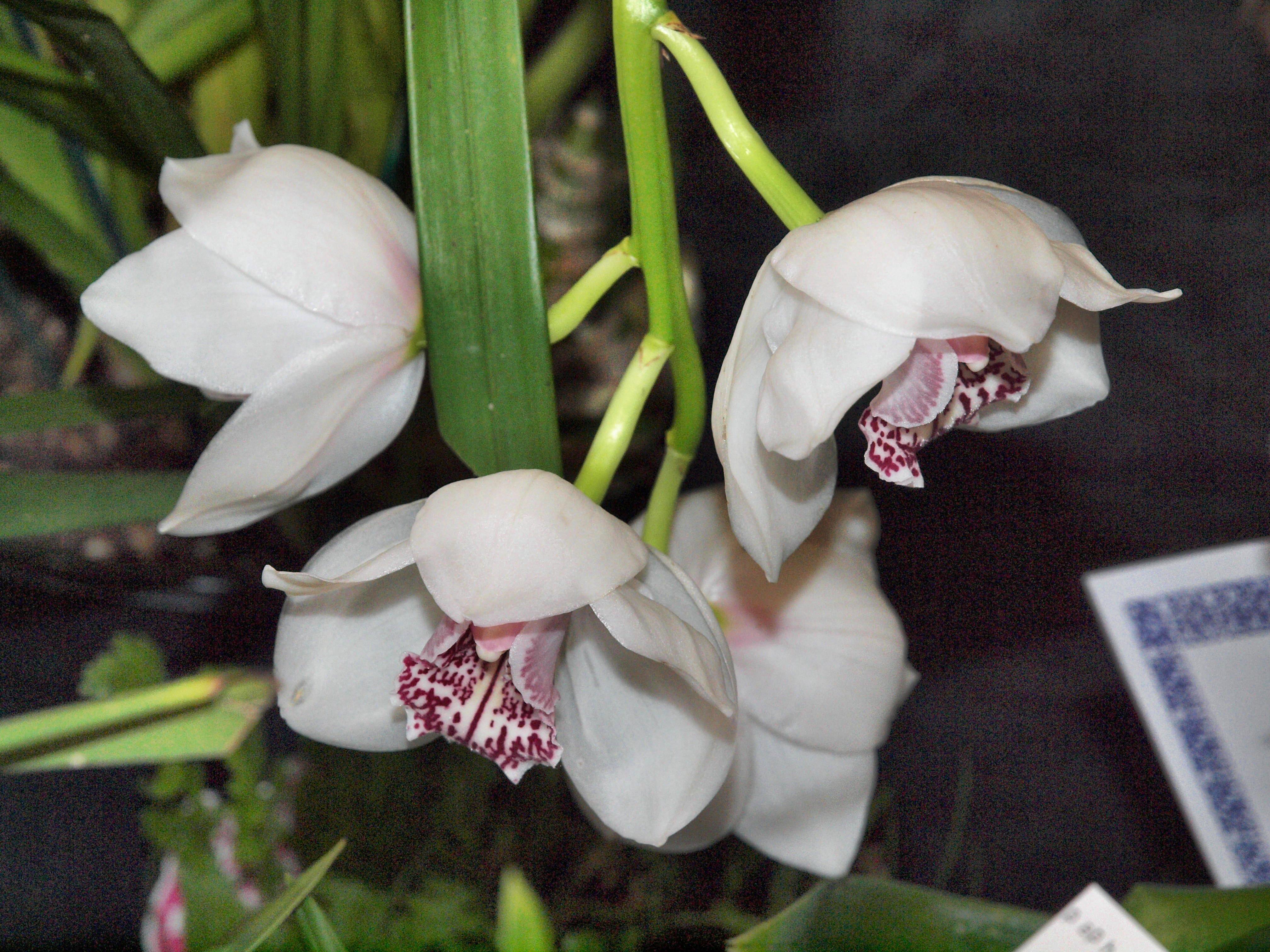 Orchid-15.jpeg