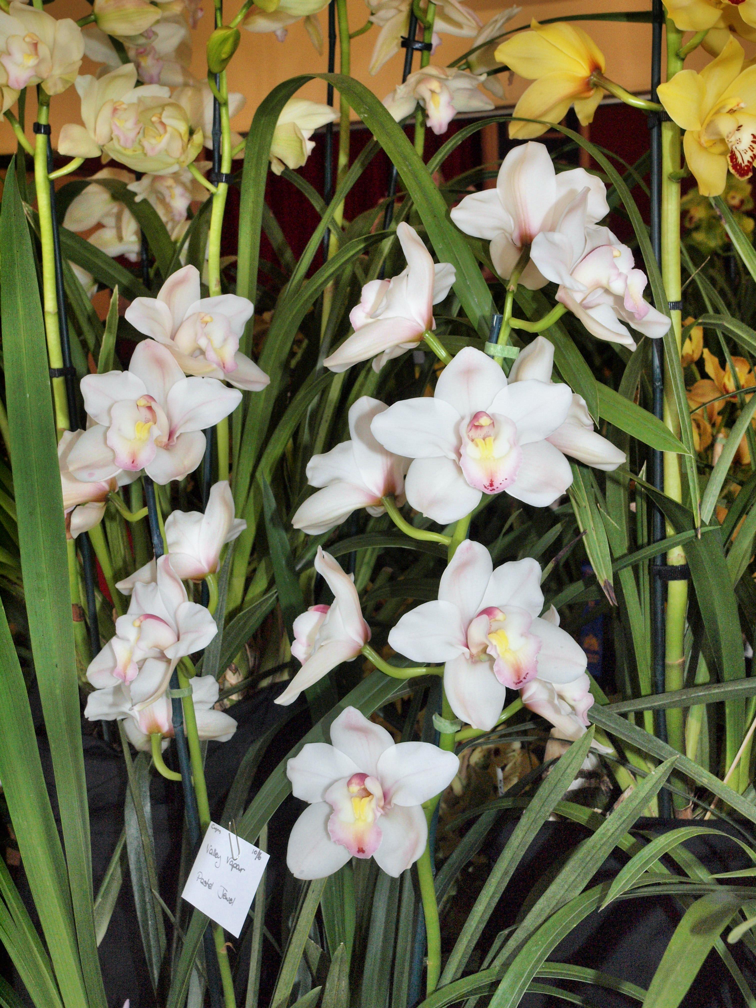 Orchid-17.jpeg