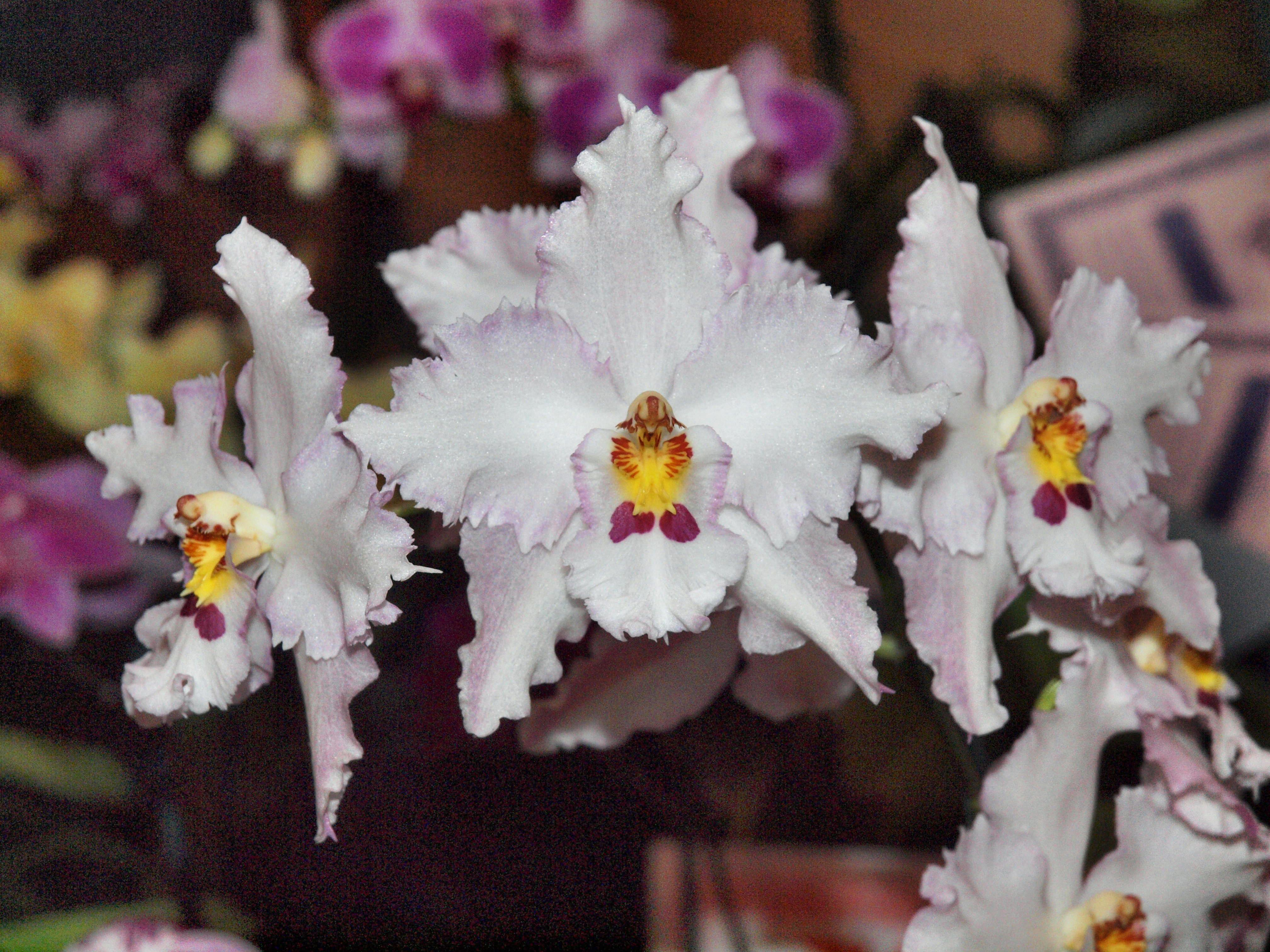 Orchid-25.jpeg