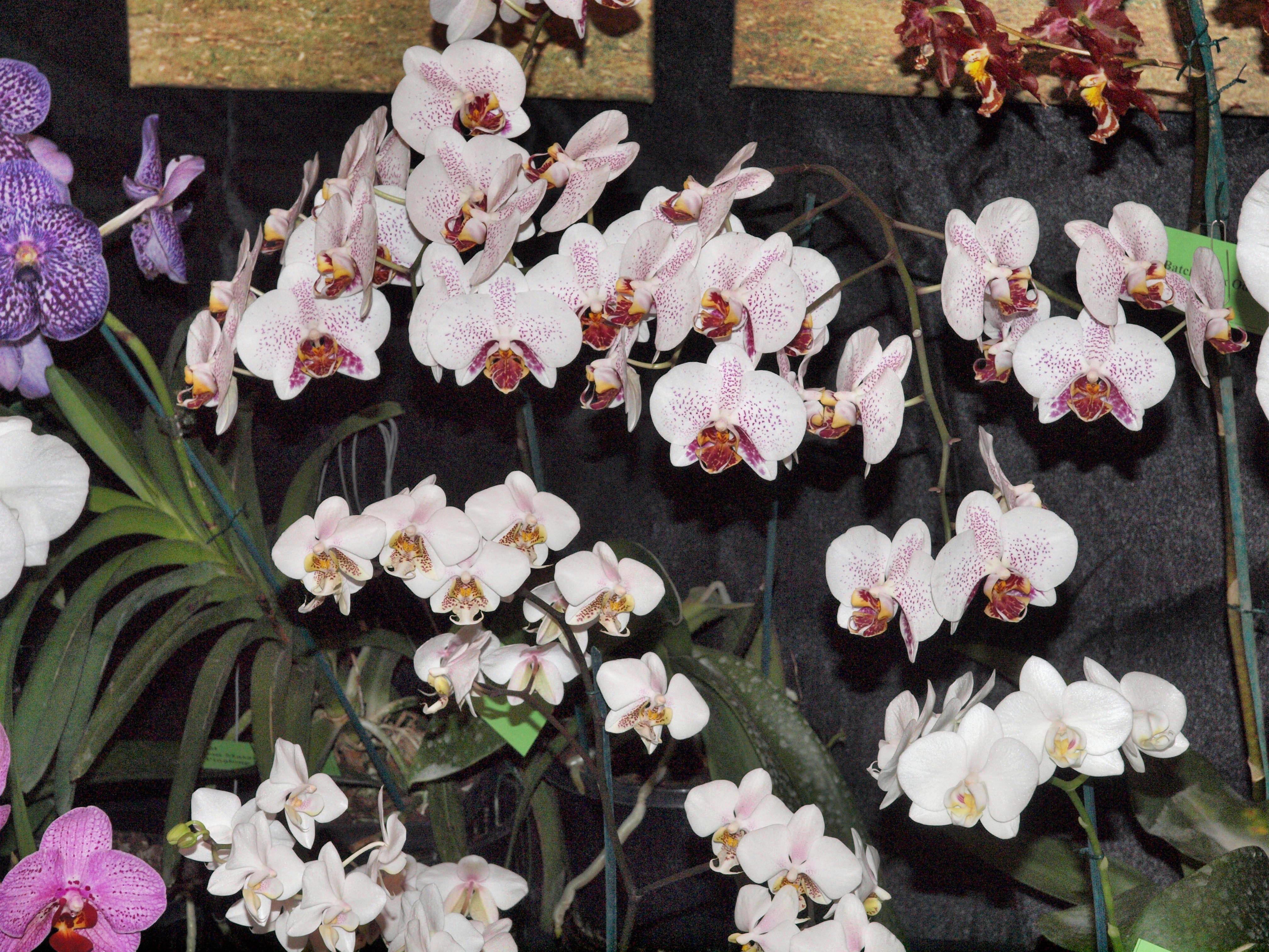 Orchid-26.jpeg
